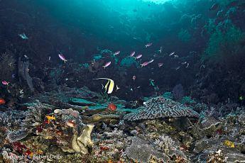 Reef scene, P. Wetar