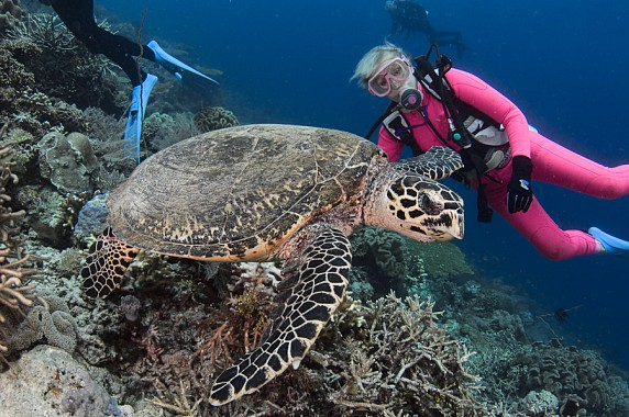 Valerie Taylor with hawksbill turtle