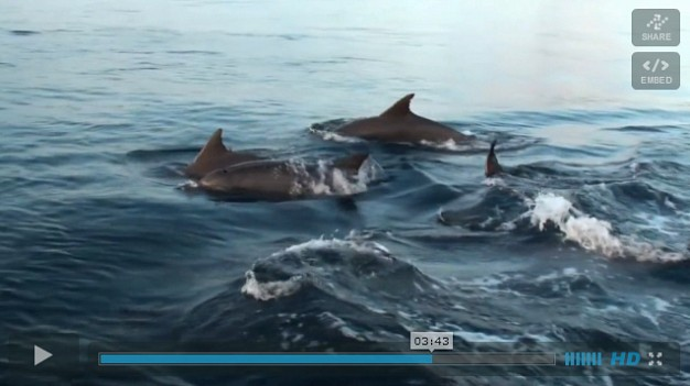 Dancing with Dolphins - Video, November 2011