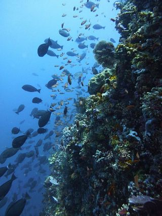 Fish & Reef