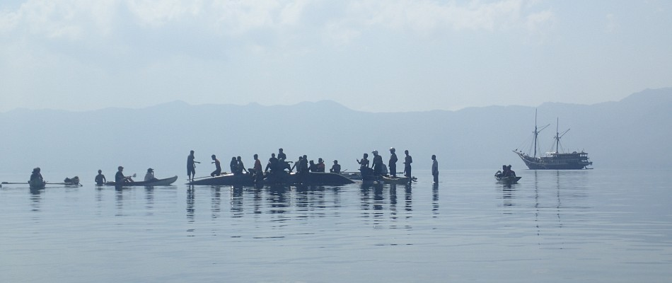 Blue Whale Rescue