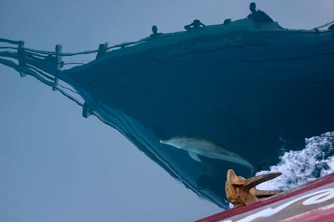 The Seven Seas & dolphin