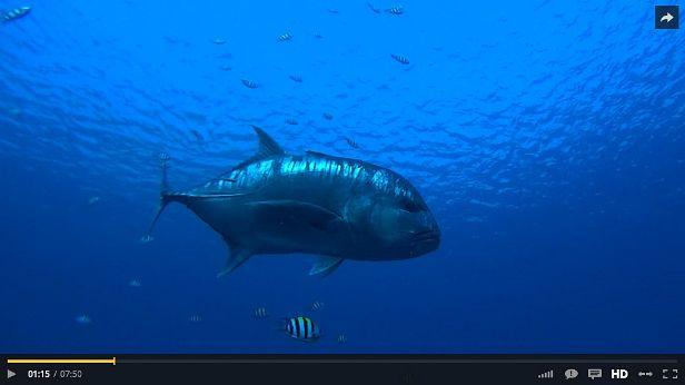Big Fish Komodo video
