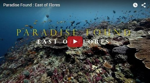 East of Flores - Paradise Found