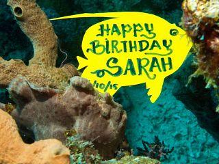 Sarah's Birthday