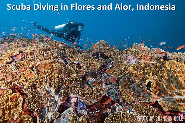Scuba Diving in Flores and Alor