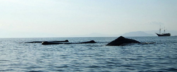 Sperm Whales and Seven Seas