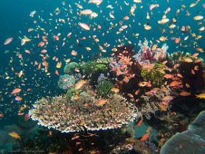 Alcatraz Reef