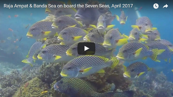 Raja Ampat & Banda Sea Video