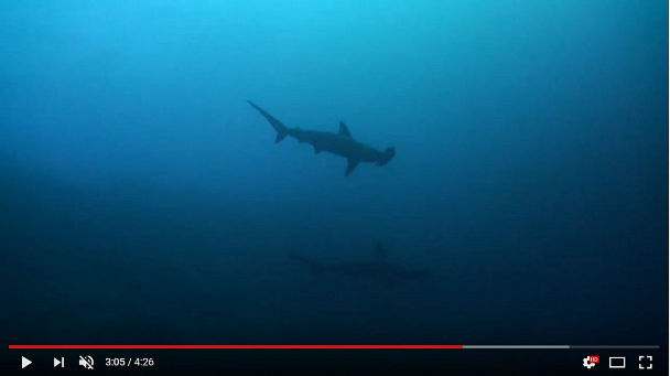Banda Sea Video