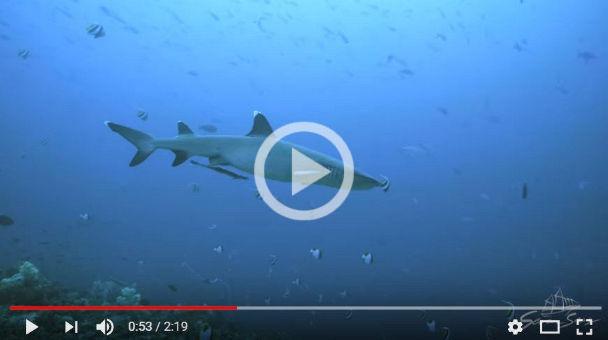 Komodo video by Alex del Olmo