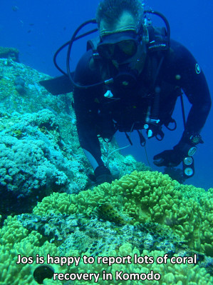 Coral recovery in Komodo