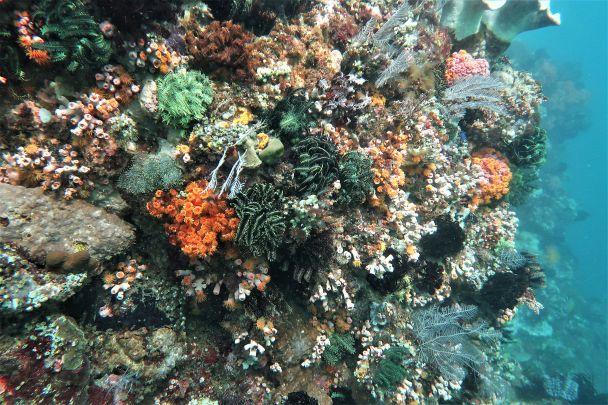 A plethora of invertebrates blanket the wall at Crinoid Canyon, South Rinca