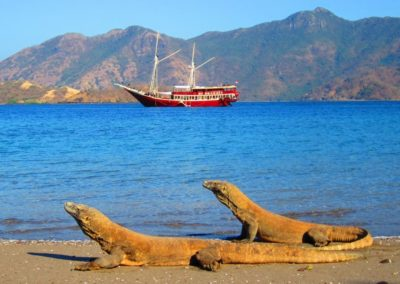 Seven Seas and Komodo dragons