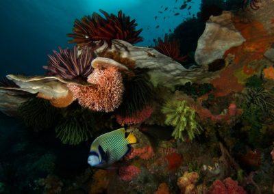 Komodo, © Hayley Baillie