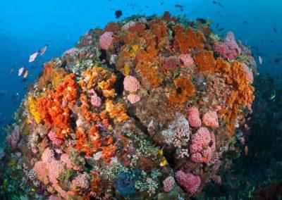 Reef, Komodo