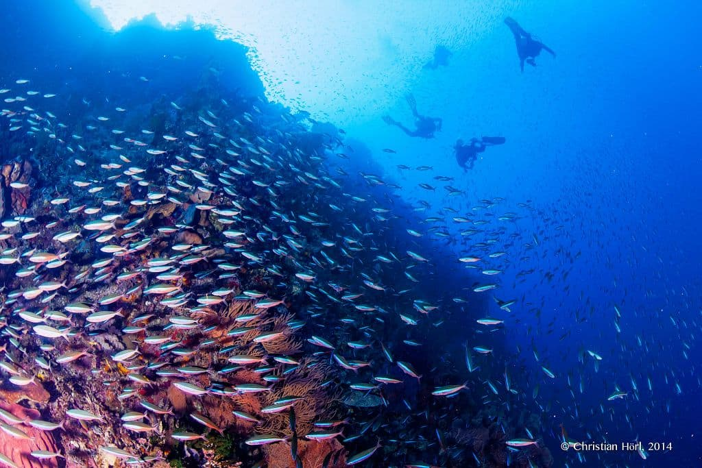 The Forgotten Islands Liveaboard Dive Cruises with The Seven