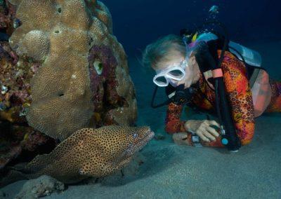 Valerie Taylor & moray eel