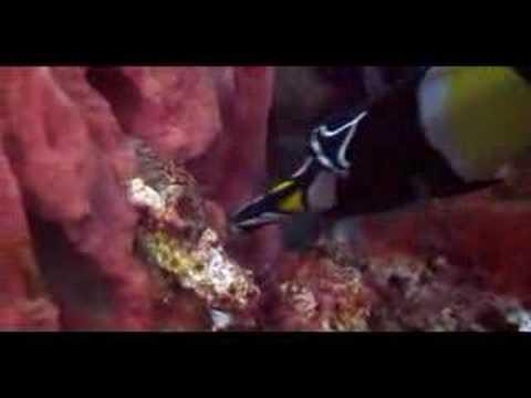 Komodo - Beneath the waves