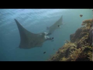 Mantas Anonymous, Raja Ampat