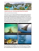 Raja Ampat and Banda Sea – A Wonderful Adventure