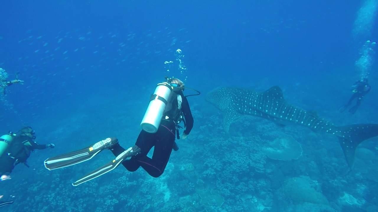 Raja Ampat on The Seven Seas 2017