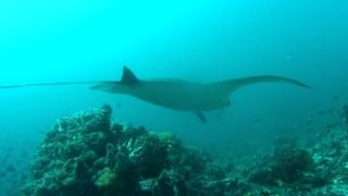 Big Fish Komodo 2015