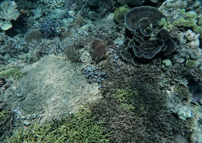 Healthy diverse hard coral garden, by Rod Salm
