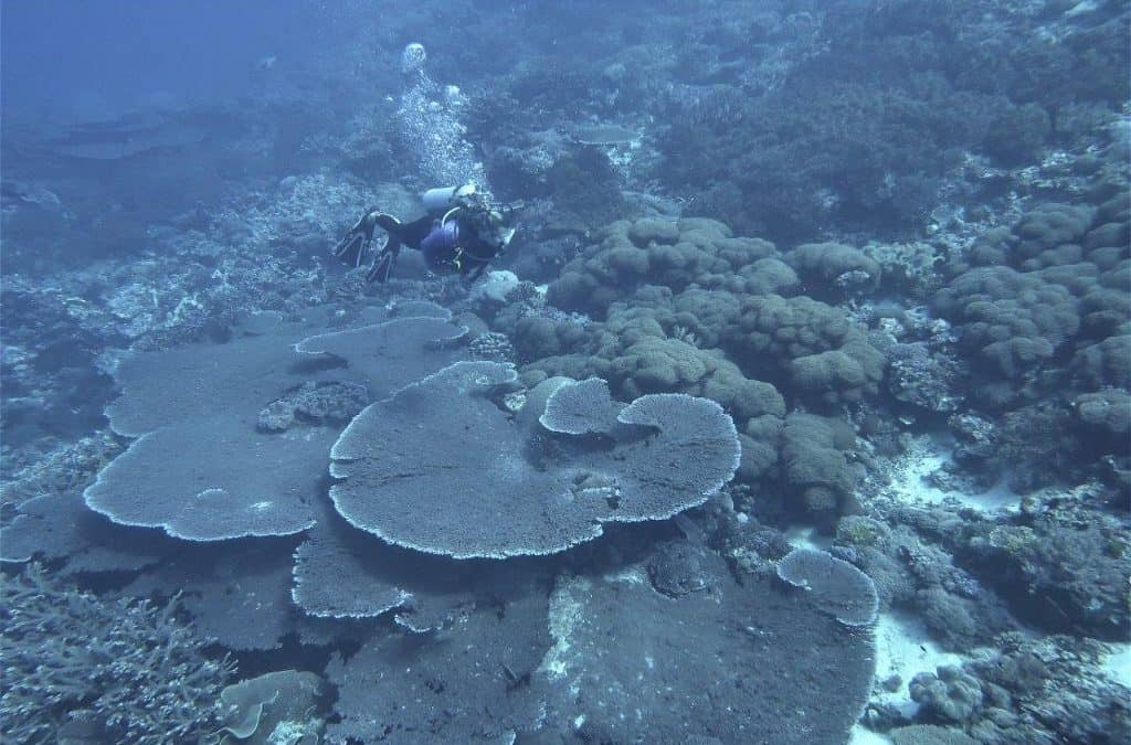 Corals alive and well among the Forgotten Islands