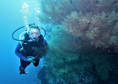 Wall diving: Black corals & seafans