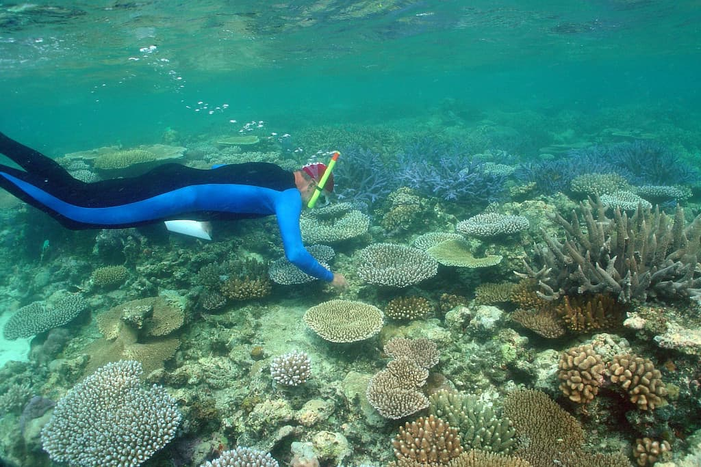 Rod recording coral recovery