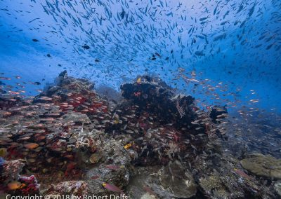 Raja Ampat - Too many fish