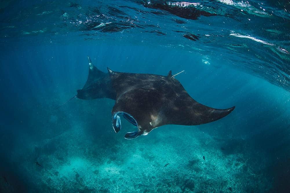 Snorkeling Raja Ampat in 2021