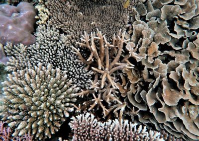 Diverse Corals, Photo by Rod Salm