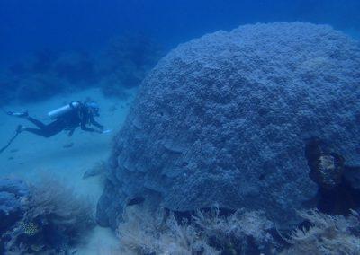 Rod with large mound Porites Pulau Kraka, Photo by Charles Birkeland