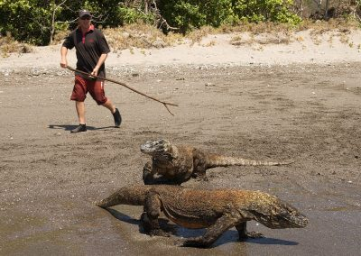 Karl & Komodo dragons