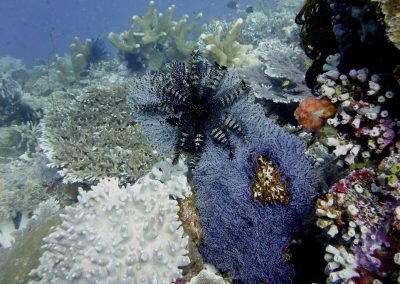 Soft corals and crinoid