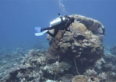 250-300 year old Boulder <i>Porites</i> coral - more resistant to stress, such corals are important builders of the reef framework