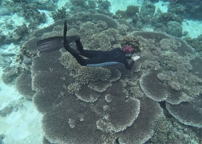Table corals are highly susceptible to heat stress, storm waves, anchoring, trampling, and destructive fishing; the presence of large old ones tells us that conditions have been stress free for decades