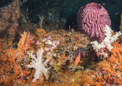 Impossible colors are realized on Indonesian reefs.