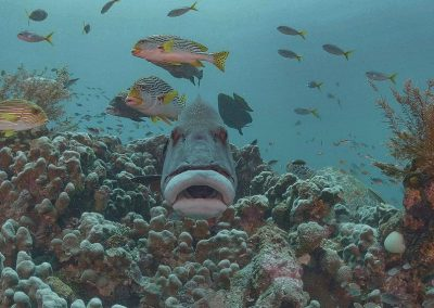 Raja Ampat Diving