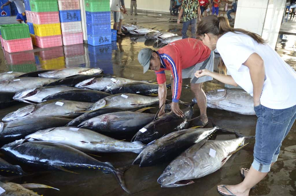 Tuna landings