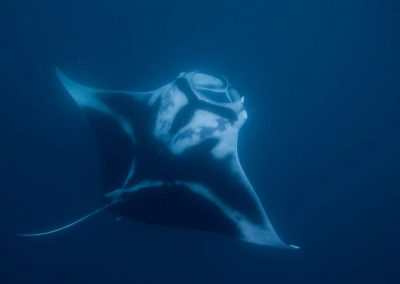 oceanic-manta-s-komodo