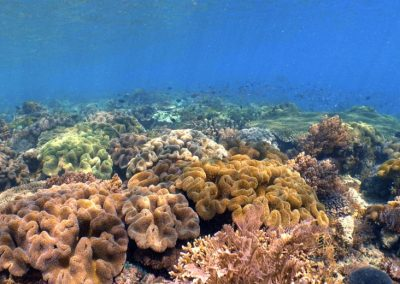 East of Flores diving