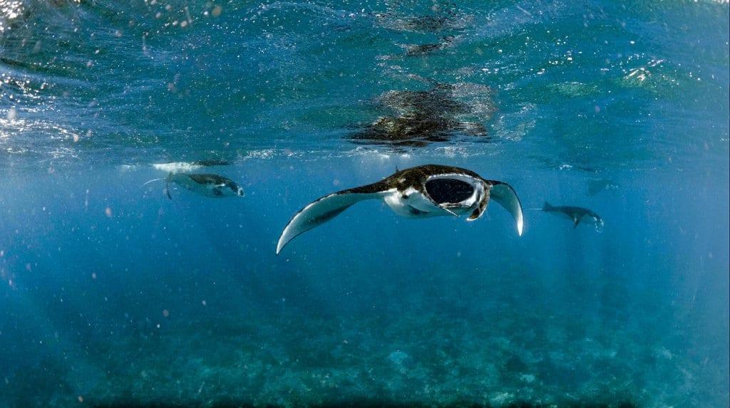 Komodo Snorkeling Trip