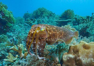 Diving the Forgotten Islands