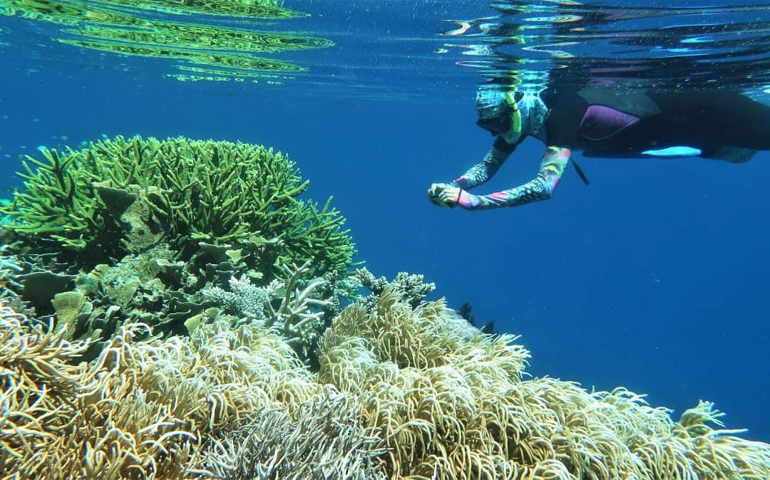Raja Ampat Informal Reef Health and Resilience Assessment