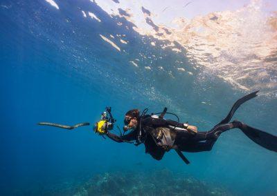 Diver & snake