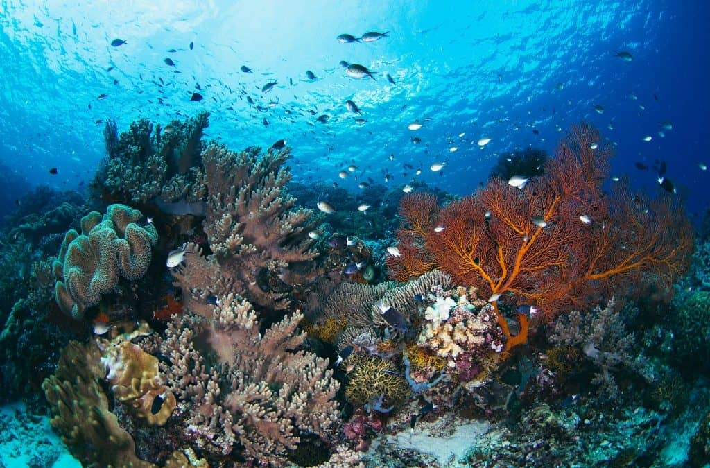 Communities Protecting Coral Reefs in the Forgotten Islands