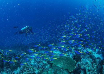 So many fishes...